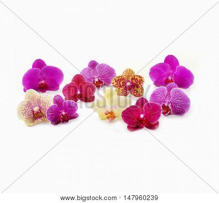 Set of fresh orchids isolated-white background