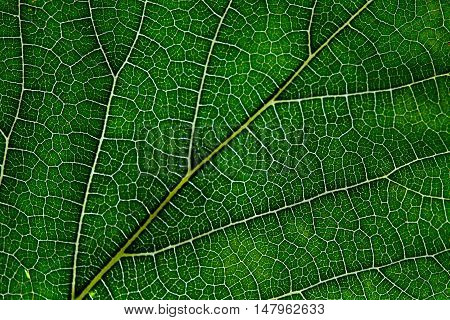 Leaf abstract background graphic texture with veins