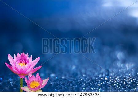 pink otus flower on blurred blue background