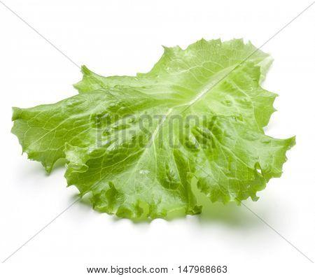 Fresh lettuce salad leaf isolated on white background cutout
