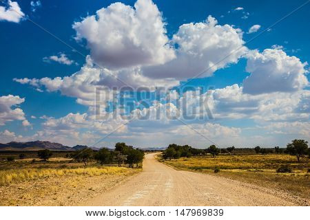 Dirt road in the African steppe. Along the road grow lush green trees. Travel to Namibia. The concept of exotic tourism