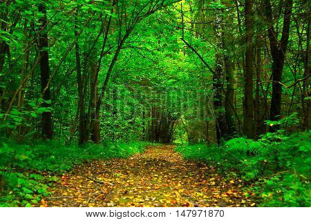 Road in the forest covered with yellow leaves in September beginning of autumn