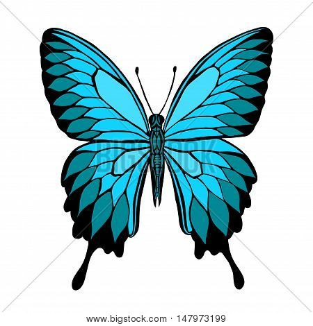 Vector butterfly. Butterfly Papilio blumei. Blue Mountain Swallowtail Butterfly