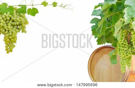 Background of the grape vines with ripening grapes and oak barrel of wine left cluster of table grapes right and an empty central part