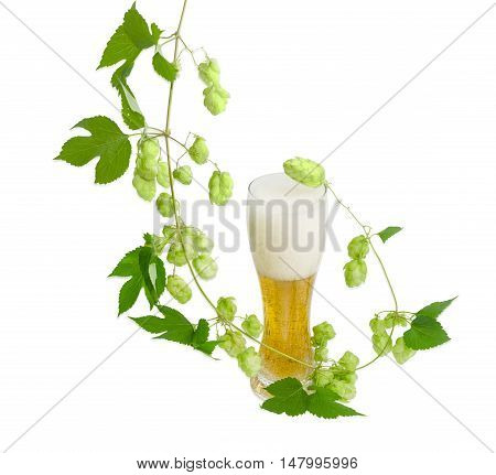 One beer glass with lager beer and hanging branch of hops with leaves and strobiles on a light background