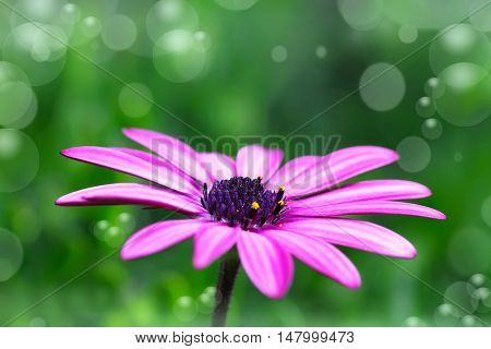 flower in the spring