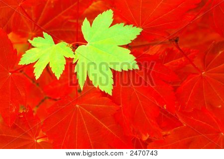 Contrasting Leaves