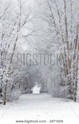 Snowy Frost Covered Tree Filled Lane In The Country