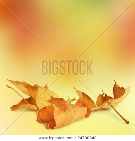 Bright Autumn Leaves On The Abstract Background With Bokeh