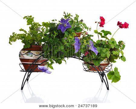 Plants In Pot