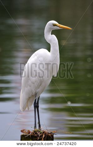 White bird.