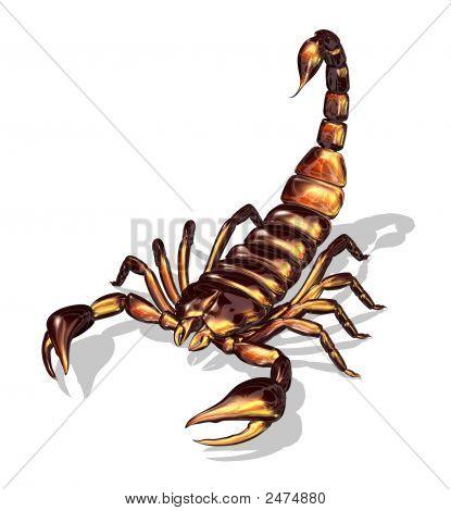 Glossy Scorpion