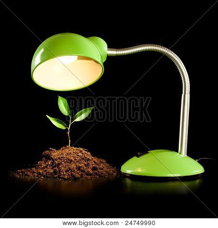Young sprout and table lamp on a black background ...