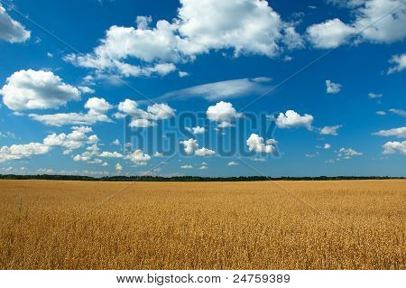 Ecology Mainstream - Clean Oats Field