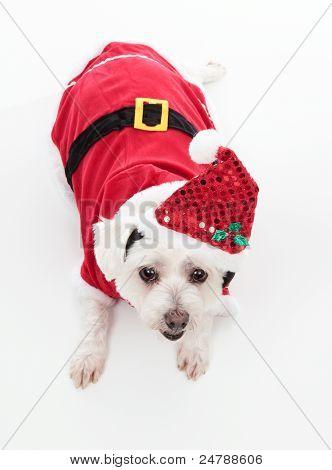 Cute Christmas Dog