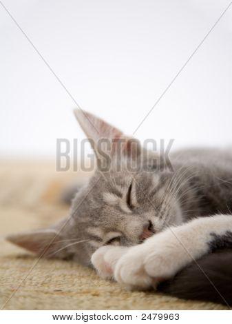Sleeping Striped Kitten