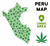 Cannabis Peru Map Collage Of Marijuana Leaves. Narcotic Addiction Template. Vector Peru Map Is Made  poster