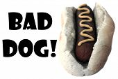 Hot Dog. Bad Dog Hot Dog Colorized in gray scale. Room for text. Isolated on white. Image and text e poster