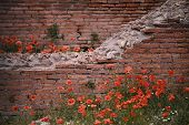 Rome Forum with ruins of historical buildings in flower field. Italy. poster