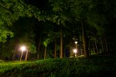 Path With Street Lamps In The Forest At Night poster