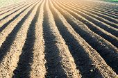 Plowed Field After Cultivation Prepared For Planting Agricultural Crops. Landscape With Agricultural poster