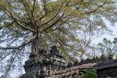 Ancient Stone Ruin In Angkor Wat Temple. Tropical Tree In Temple Tower. Khmer Kingdom Heritage Ruin  poster