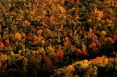 Beautiful Color Of Autumn Environment, Colorful Tree Pattern, Fall Season Pattern, Fall Color, Fores poster
