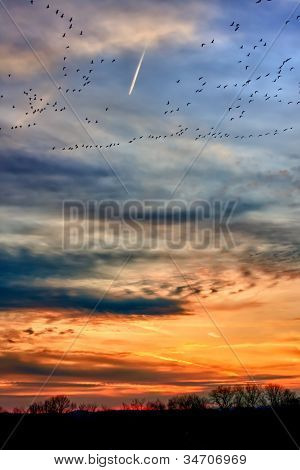 Migrating geese flocks at sunset