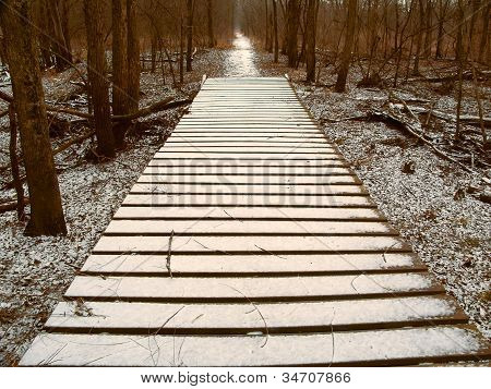 Snowfall Over Hiking Boardwalk
