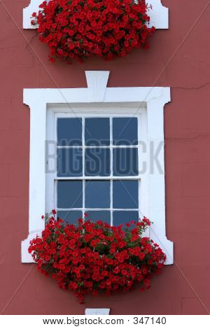 Red Window Beauty