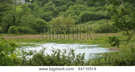 Water meadow with Ragged Robin