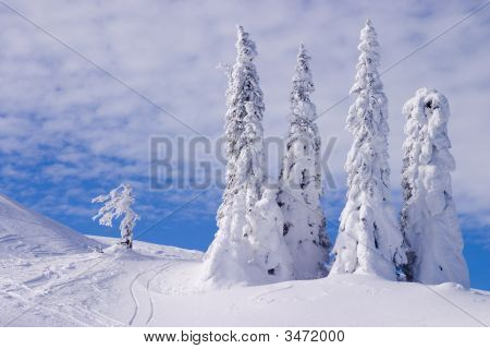 Snowy Landscape On Jahorina Mountain Near Sarajevo,