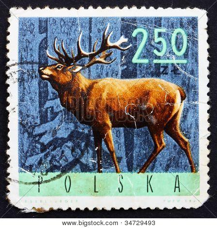 Postage stamp Poland 1965 Red Deer