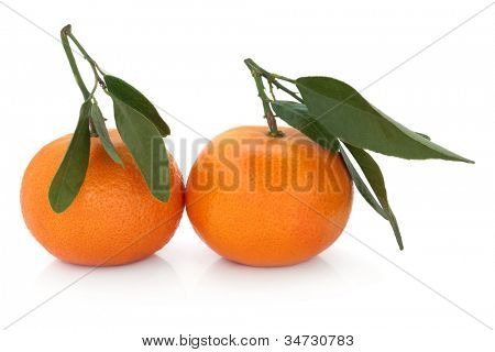 Satsuma orange fruit with leaf sprigs over white background.