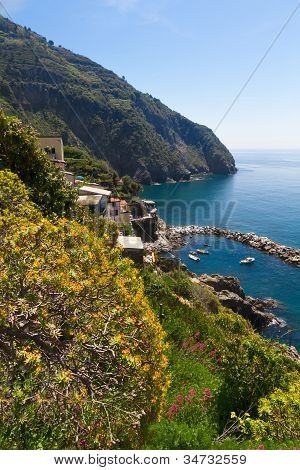 Coastline with yellow flowers Riomaggiore, Cinque Terre, Italy