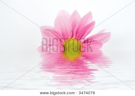 Flower In Water