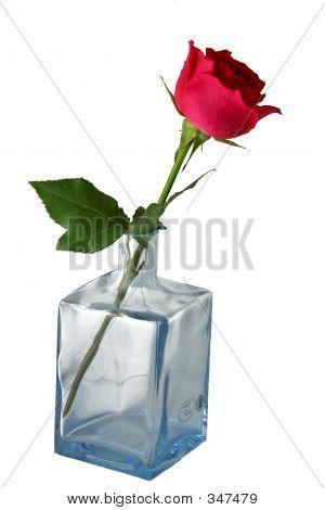Blue Vase And Rose