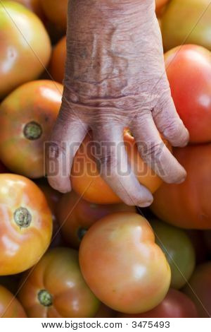 Woman Picking One Tomato From The Pile