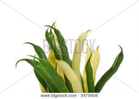 Green & Yellow Bean Bouquet