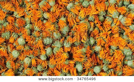 Dried Marigold