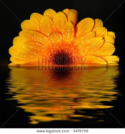 Sunset floral
