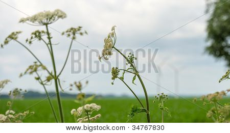 Wildflowers in a field