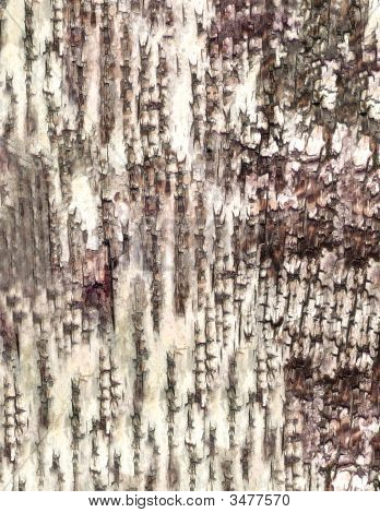 Close-Up Bark Of Birch Texture To Background