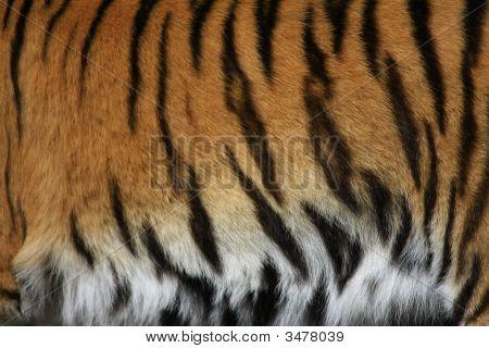 tiger stripes.