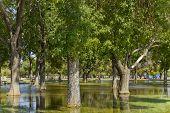 picture of cortez  - Summer Monsoon season flood in Cortez park Phoenix Arizona - JPG