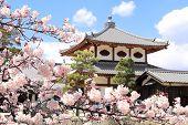 Pavilion in Itsukushima Shrine and sakura blossom branches. Sakura blossom season in Miyajima island poster