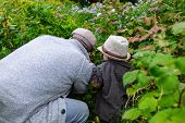 Rear View Of Father And Son Wearing Cap And Sun Hat While Picking Fresh Green Plants In Park During  poster