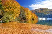 stock photo of fall leaves  - Colors of autumn by lake Balkana near Mrkonjic Grad Bosnia and Herzegovina - JPG