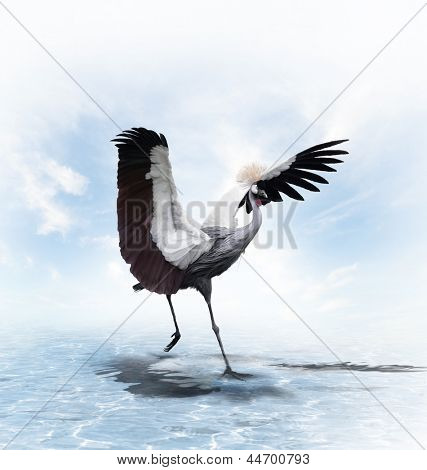 Crowned Crane (Balearica pavonina) In The Water