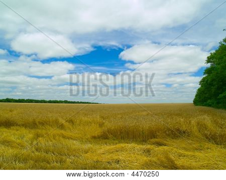 Landscape With The Blue Sky, White Clouds And Ripened Wheat